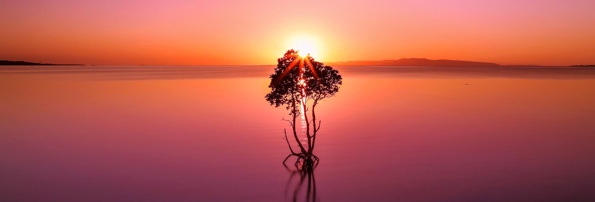 石垣島のサンセットマングローブ